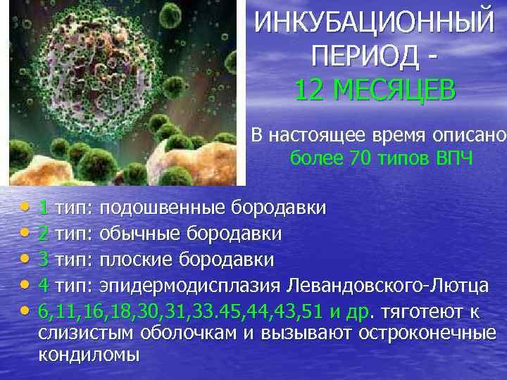 ИНКУБАЦИОННЫЙ ПЕРИОД 12 МЕСЯЦЕВ В настоящее время описано более 70 типов ВПЧ • 1
