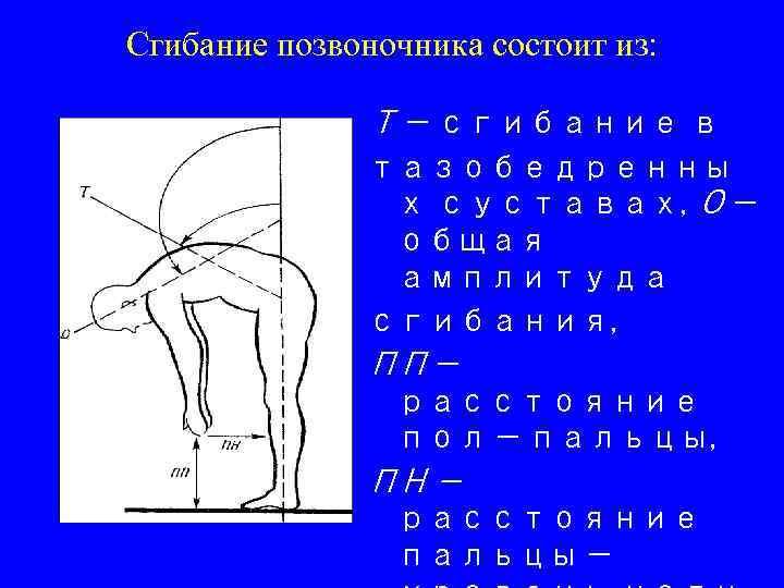 Сгибание позвоночника состоит из: Т — сгибание в тазобедренны х суставах, О — общая