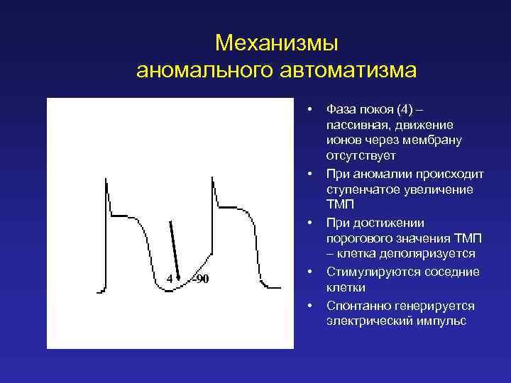 Механизмы аномального автоматизма • • • 4 -90 • • Фаза покоя (4) –