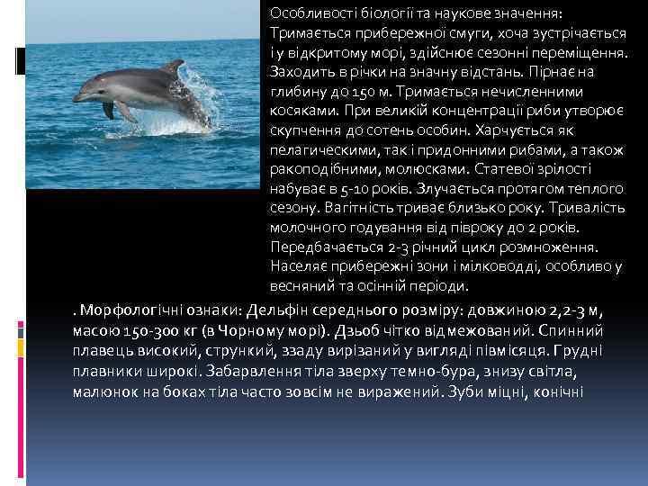 Особливості біології та наукове значення: Тримається прибережної смуги, хоча зустрічається і у відкритому морі,