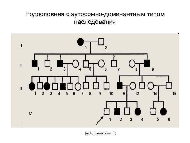 Родословная с аутосомно-доминантным типом наследования (из http: //med. claw. ru)