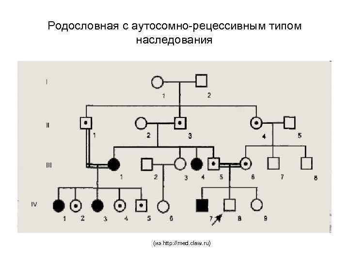 Родословная с аутосомно-рецессивным типом наследования (из http: //med. claw. ru)