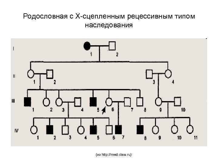 Родословная с Х-сцепленным рецессивным типом наследования (из http: //med. claw. ru)