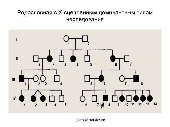 Родословная с Х-сцепленным доминантным типом наследования (из http: //med. claw. ru)
