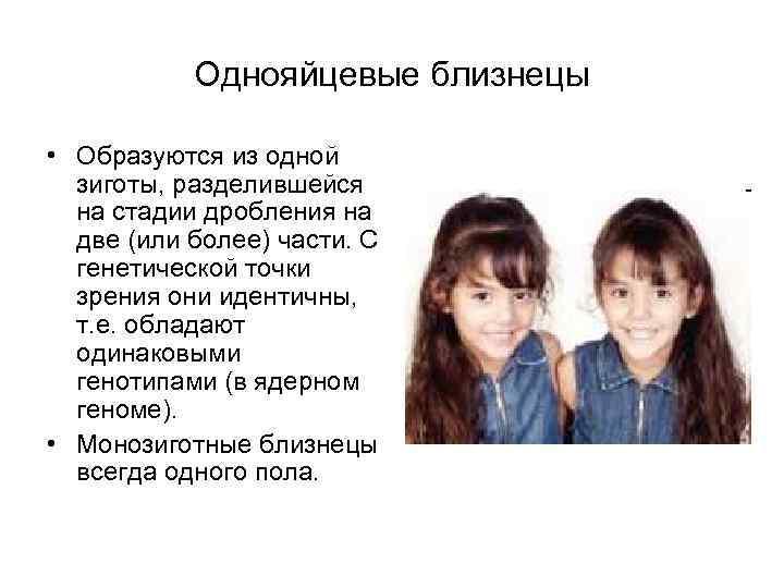 Однояйцевые близнецы • Образуются из одной зиготы, разделившейся на стадии дробления на две (или