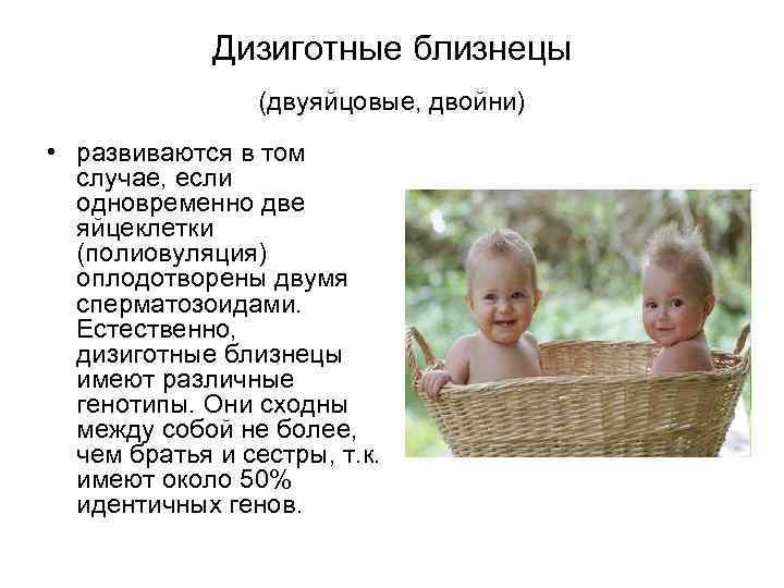 Дизиготные близнецы (двуяйцовые, двойни) • развиваются в том случае, если одновременно две яйцеклетки (полиовуляция)
