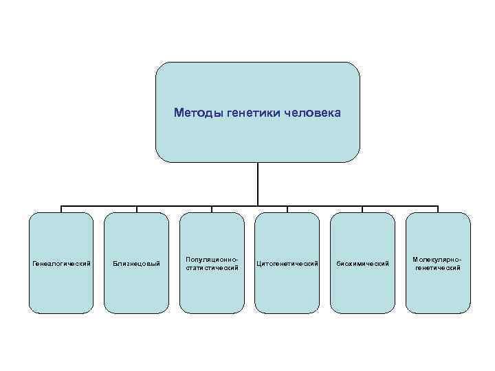 Методы генетики человека Генеалогический Близнецовый Популяционностатистический Цитогенетический биохимический Молекулярногенетический