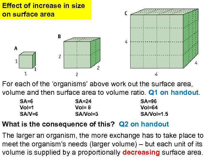 effect of surface area to volume ratio on heat loss In this experiment my aim is to find the relationship between surface area to volume ratio and how this effects heat loss, and how animals adapt to surrounding temperature.