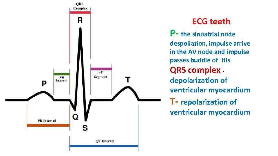 ECG teeth P- the sinoatrial node despoliation, impulse arrive in the AV node and