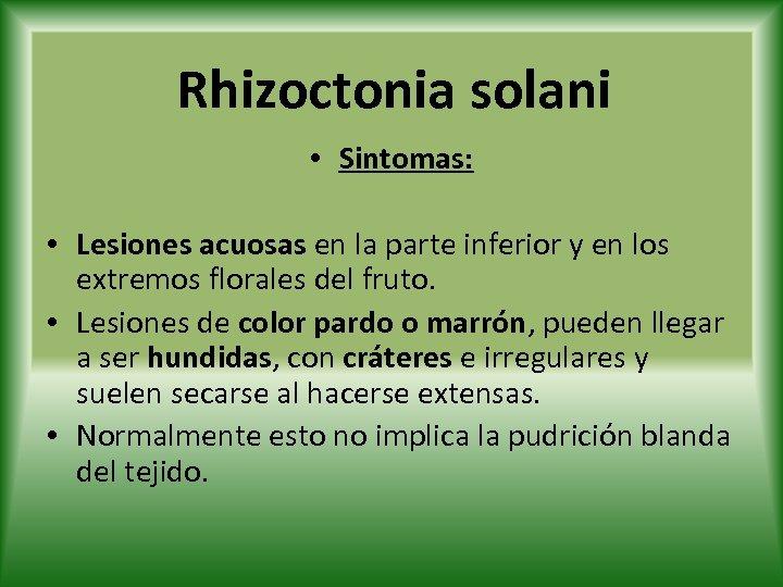 Rhizoctonia solani • Sintomas: • Lesiones acuosas en la parte inferior y en los