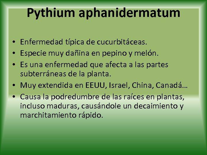 Pythium aphanidermatum • Enfermedad típica de cucurbitáceas. • Especie muy dañina en pepino y