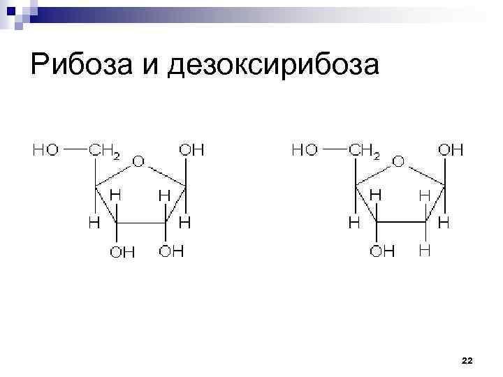 Рибоза и дезоксирибоза 22