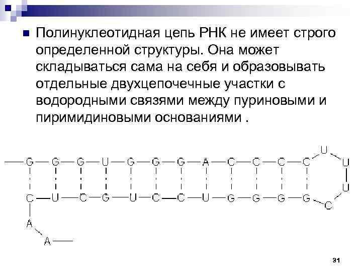 n Полинуклеотидная цепь РНК не имеет строго определенной структуры. Она может складываться сама на