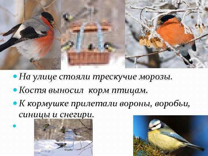 На улице стояли трескучие морозы. Костя выносил корм птицам. К кормушке прилетали вороны,
