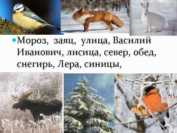 Мороз, заяц, улица, Василий Иванович, лисица, север, обед, снегирь, Лера, синицы,