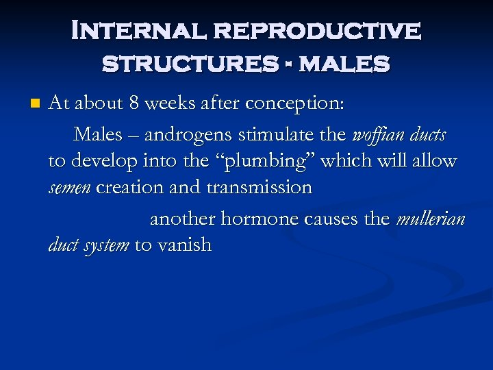 Internal reproductive structures - males n At about 8 weeks after conception: Males –