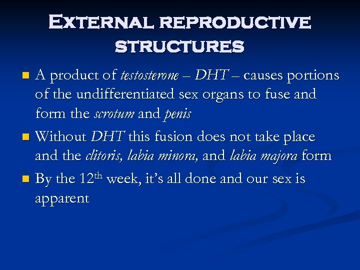 External reproductive structures A product of testosterone – DHT – causes portions of the