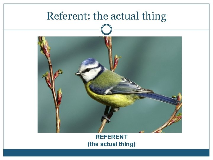 Referent: the actual thing REFERENT (the actual thing)