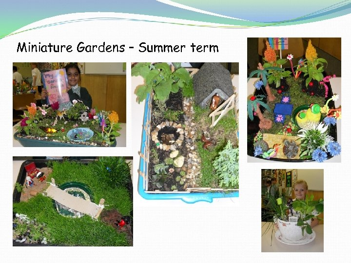 Miniature Gardens – Summer term