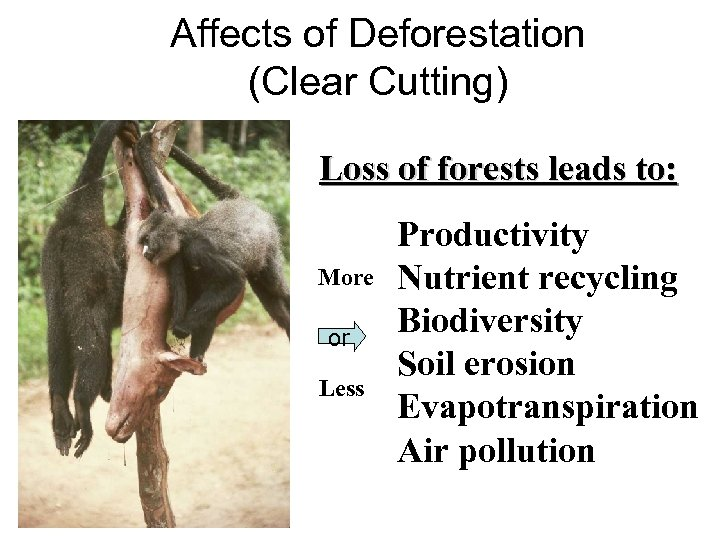 Affects of Deforestation (Clear Cutting) Loss of forests leads to: More or Less Productivity