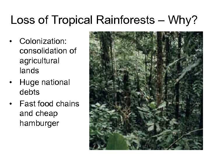 Loss of Tropical Rainforests – Why? • Colonization: consolidation of agricultural lands • Huge