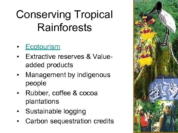 Conserving Tropical Rainforests • Ecotourism • Extractive reserves & Valueadded products • Management by