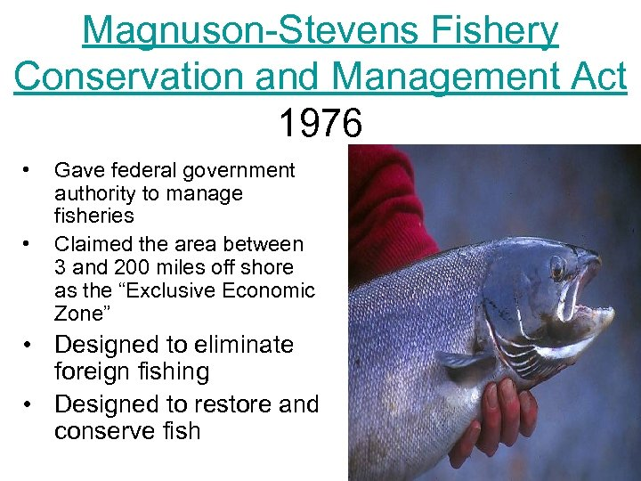Magnuson-Stevens Fishery Conservation and Management Act 1976 • • Gave federal government authority to