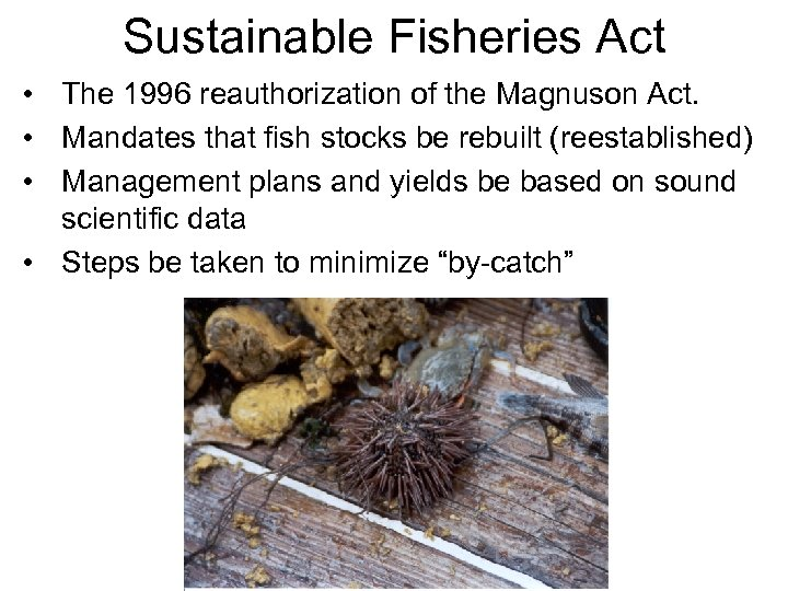 Sustainable Fisheries Act • The 1996 reauthorization of the Magnuson Act. • Mandates that