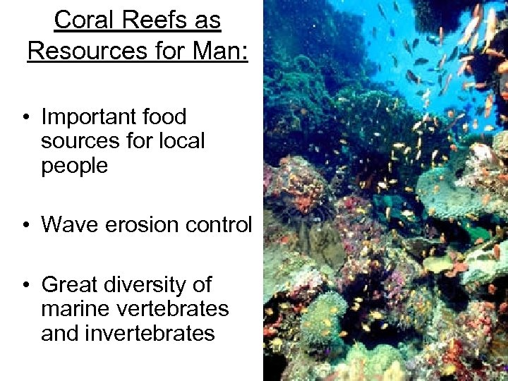 Coral Reefs as Resources for Man: • Important food sources for local people •