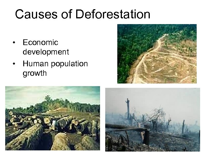 Causes of Deforestation • Economic development • Human population growth