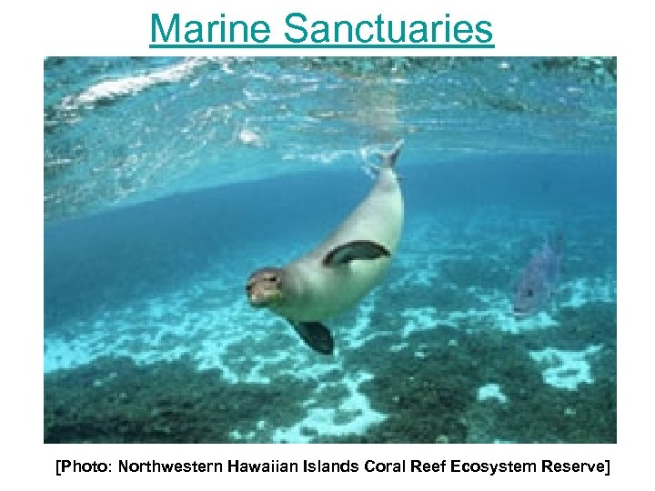 Marine Sanctuaries [Photo: Northwestern Hawaiian Islands Coral Reef Ecosystem Reserve]