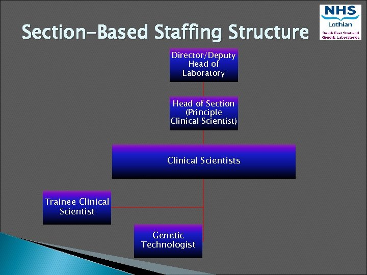 Section-Based Staffing Structure Director/Deputy Head of Laboratory Head of Section (Principle Clinical Scientist) Clinical