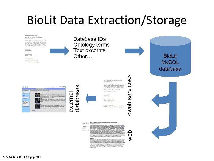 Bio. Lit Data Extraction/Storage Meta-data <web services> XML, Bio. Lit My. SQL database web
