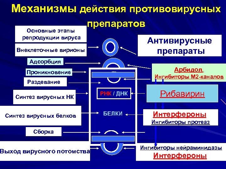 Механизмы действия противовирусных Основные этапы репродукции вируса препаратов Антивирусные препараты Внеклеточные вирионы Адсорбция Арбидол,