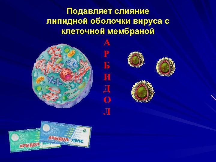 Подавляет слияние липидной оболочки вируса с клеточной мембраной А Р Б И Д О