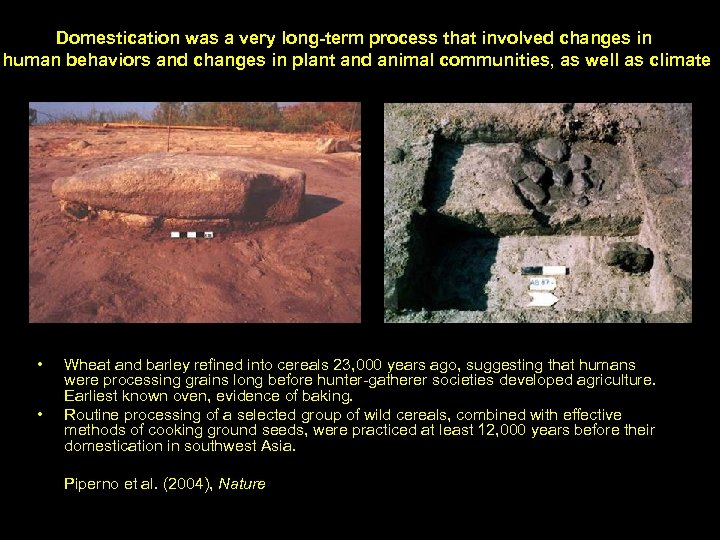 Domestication was a very long-term process that involved changes in human behaviors and changes