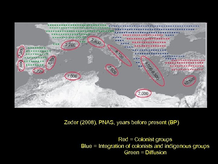 Zeder (2008), PNAS, years before present (BP) Red = Colonist groups Blue = Integration