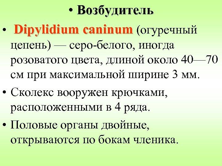 • Возбудитель • Dipylidium caninum (огуречный цепень) — серо-белого, иногда розоватого цвета, длиной
