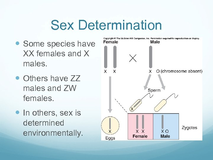 Sex Determination Some species have XX females and X males. Others have ZZ males