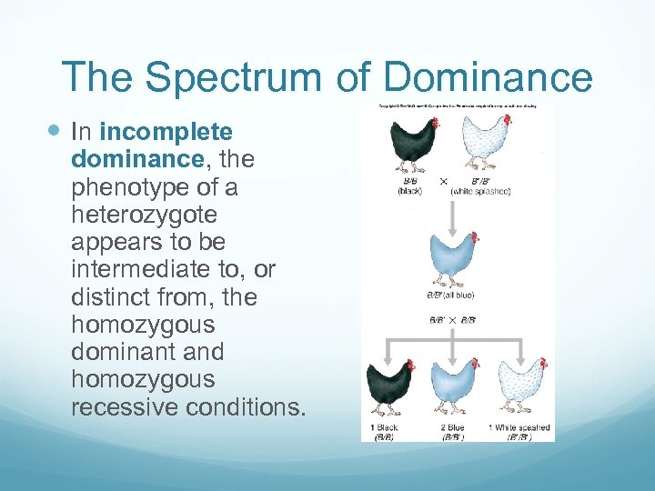 The Spectrum of Dominance In incomplete dominance, the phenotype of a heterozygote appears to