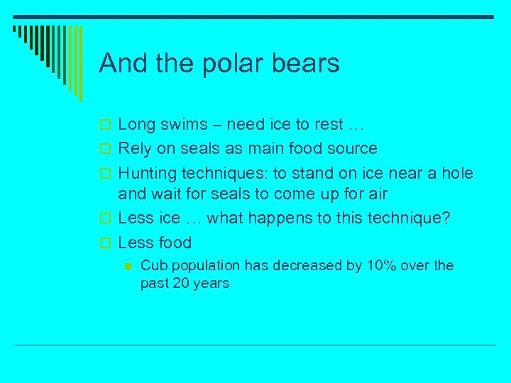 And the polar bears o Long swims – need ice to rest … o