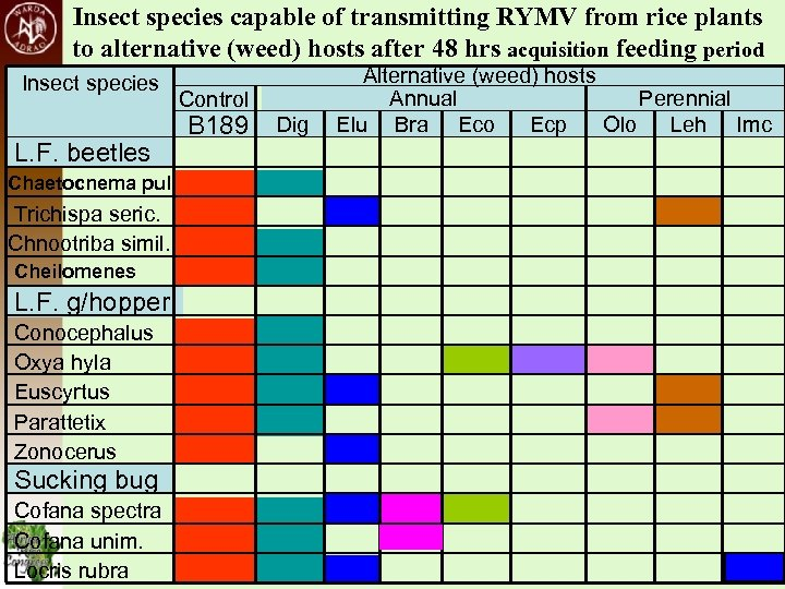 Insect species capable of transmitting RYMV from rice plants to alternative (weed) hosts after