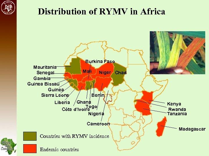 Distribution of RYMV in Africa Burkina Faso Mauritania Senegal Gambia Guinea Bissau Guinea Sierra