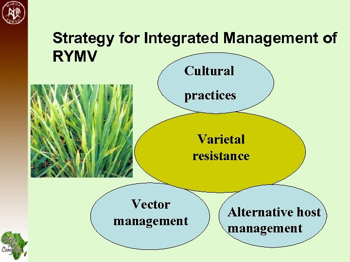 Strategy for Integrated Management of RYMV Cultural practices Varietal resistance Vector management Alternative host