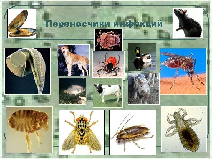 Переносчики инфекций