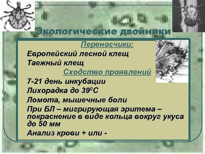 Экологические двойники Переносчики: Европейский лесной клещ Таежный клещ l Сходство проявлений 7 -21 день