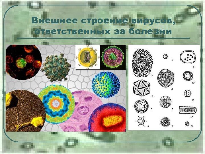 Внешнее строение вирусов, ответственных за болезни