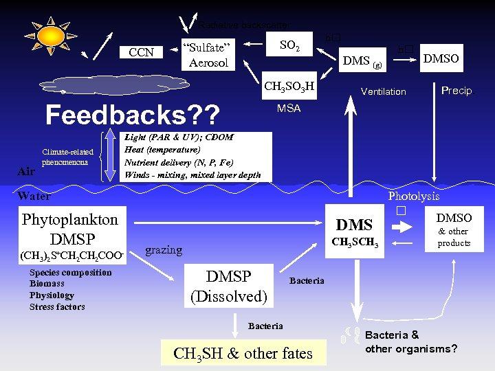 "Radiative backscatter SO 2 ""Sulfate"" Aerosol CCN CH 3 SO 3 H Feedbacks? ?"