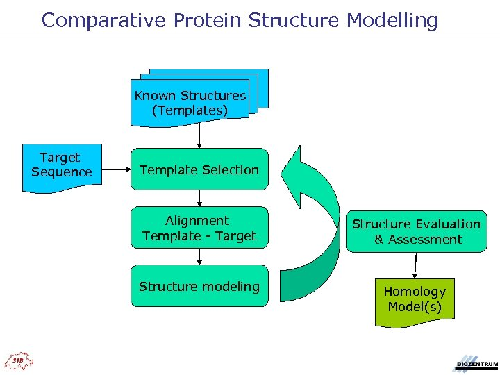 Comparative Protein Structure Modelling Known Structures (Templates) Target Sequence Template Selection Alignment Template -