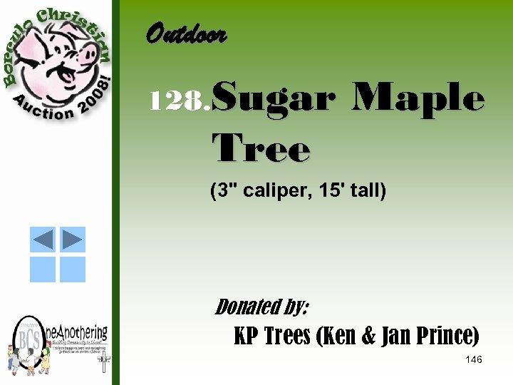 Outdoor 128. Sugar Tree Maple (3